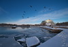 Geese and Ice (Gavin Edmondstone) Tags: brontecreek bronteharbour canadageese brantacanadensis ice snow oakville ontario ultrawideangle cans2s