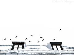hoch über dem Dach (Martin.Matyas) Tags: