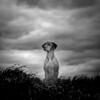 Oh, Johnny! IV (Dan-Schneider) Tags: johnny dog light portrait blackandwhite bw schwarzweiss clouds monochrome moment silhouette fujix