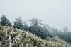 _MG_3751 (waychen_c) Tags: nantou renai renaitownship hehuanshan hehuanmountain wuling snow 南投 仁愛 仁愛鄉 合歡山 武嶺 tarokonationalpark 台14甲 fog mist