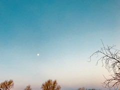 12/365/7 (f l a m i n g o) Tags: thursday 2018 4th january morning moon sky 365days project365