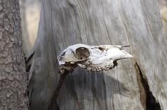 Bones (Just Reed) Tags: challengefactorywinner