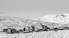 Winter Deer (graemes83) Tags: pentax da 300mm snow cold ice lymepark nationaltrust