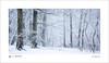 First snow (tobchasinglight) Tags: beechtrees buckinghamshire burnhambeeches chilterns cityoflondon corporationoflondon englishwoodland farnhamcommon frost landscape oaktrees snow stokepoges uk winter2017 â©paulmitchell