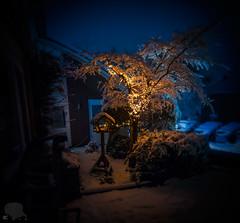 171211 Brenizer birdhouse 2000x Web (oFerry) Tags: snow rare night white lights christmas