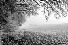 Into the white (timfeld1) Tags: fog tracks forest cold black white field winter