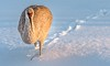 Snowbird (Wes Iversen) Tags: antigonecanadensis brighton gruscanadensis kensingtonmetropark michigan milford sandhillcranes tamron150600mm birds ice nature snow water wildlife winter