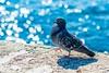 pigeon-517244_1920 (5W6WWR5OJCSTVFGGDN7GSSC3OB) Tags: islam jesus evangelio coran cristo verdad vida