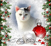 Merry Christmas Dear Flickr Friends! (Xena*best friend*) Tags: richardgere rg merrychristmas cats whiskers feline katzen gatto gato chats furry fur pussycat feral tiger pets kittens kitty piedmontitaly piemonte canoneos760d italy wood woods wildanimals wild paws animals calico markings ©allrightsreserved purr digitalrebelt6s efs18135mm flickr outdoor animal pet winter snow cold