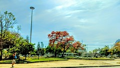 é só mais um dia (luyunes) Tags: beleza praiadebotafogo riodejaneiro cidademaravilhosa motoz paisagem luciayunes arvores gente streetscene streetphotography streetphoto fotografiaderua motozplay