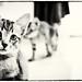 It's a little tabby kitten! 🙀