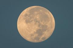 Morning Full Moon (BP Chua) Tags: singapore moon morning fullmoon supermoon early bluesky nikon d800e 600mm telephoto nature