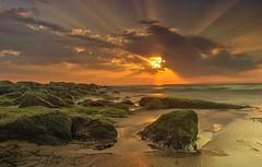 (neugebauerklaus) Tags: friesland insel nordsee algen steine wasser sylt strand meer sonneuntergang