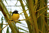 Sucrier (Pascal Le Hors) Tags: sucrier guadeloupe