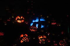 IMG_6690 (comtrag) Tags: jackolanterns rogerwilliamszoo rhodeisland halloween pumpkins pumpkincarving