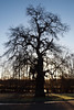 2017_12_0354 (petermit2) Tags: backlit silhouette tree clumberpark clumber sherwoodforest sherwood nottinghamshire nationaltrust nt