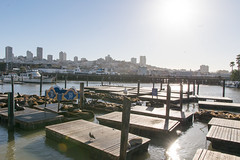 Pier 39 (takashi_matsumura) Tags: sanfrancisco california unitedstates fishermans wharf pier 39 bay area nikon d5300 seals sigma 1750mm f28 ex dc os hsm ngc