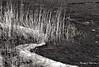 L'hiver s'installe sur les berges. (Argentique) / Winter is there... (Film) (Pentax_clic) Tags: pentax zx5 rollei retro 400s lmax 14 lac deuxmontagnes vaudreuil quebec robert warren argentique film nb bw decembre 2017