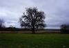 THE OLD PEAR TREE ...NOW (Fimeli) Tags: nature tree landscape landschaft winter jahreszeit