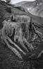 Tree Trunk (scot63us) Tags: aria contax 35mmfilm delta100 ilford marinheadlands carlzeissplanar1450t planart1450