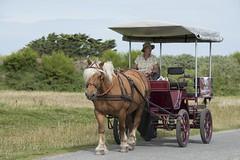 Au pas du cheval *---- ----° (Titole) Tags: horse calèche carriage titole nicolefaton woman iledebatz bretagne challengegamewinner