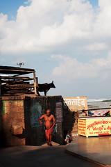 Varanasi, India (venkatfotos) Tags: varanasi india ganga ghat river color cow man venkat venkatphotography streetphotography indianstreetphotography canoneos40d canon1740mm