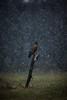 Lonely Planet (Mr F1) Tags: eagle whitetailedeagle wte wtse johnfanning woodland europe poland outdoors nature snow lonelyplanet dark winter dull post perch raptor bop birdofprey birdsofprey cold ice wild