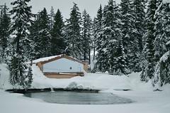 Grouse Mountain (nastashastreiling) Tags: vancouver winter snow mountain grouse trees nature britishcolumbia bc nikon nikond5100 portrait cabin ski snowboard