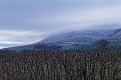 cloud cap (scottprice16) Tags: england lancashire clitheroe pendlehill southpennines hedge cut branches stark winter december snow ice cloud weather canon canoneos7d sigma 1750mmf28 landscape rural countryside