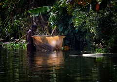 Checking the Net (Rod Waddington) Tags: africa afrique madagascar malagasy man fishing fish fishermen net jungle trees water reflection green outdoor people candid river