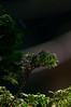 Flora y Fauna de Shirakawa-Go (cooljapanes) Tags: shirakawa go shirakawago naturaleza nature flower japan japón mura town green mushi insect 虫 自然 緑 白川 岐阜