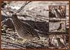 Roadrunner Collage (Kerstin Winters Photography) Tags: flickrnature flickr nikondigital nikondsl sigma naturephotography naturfotografie vogel albuquerque newmexico bird roadrunner