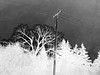 Winter Texturized 4 (Rossdxvx) Tags: textured texture textures texturized trees utilitypole 2017 blackandwhite bleak grey gritty winter cold contrast overexposed experimental experimentation