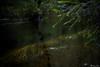 AY6A5584 (fcruse) Tags: cruse crusefoto 2018 vinter canon5dmarkiv natur skog nature forest tyrestanationalpark longexposure stockholm sweden se tyresta