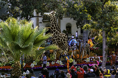 Dole float (Thad Zajdowicz) Tags: zajdowicz pasadena california roseparade 2018 usa outdoor outside canon eos 5dmarkiii 5d3 digital dslr color colour festive availablelight lightroom ef70200mmf4lisusm float parade people giraffe tree palm fronds green
