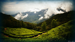 Beyond! (the_yellow) Tags: munnar green kerala tamilnadu india nature travel sonyslta58 sony alpha58 hills hill hilltop cloudy foggy tea teaplantation