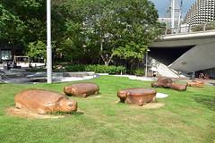 Esplanade Park Playground (chooyutshing) Tags: woodsculptures turtles esplanadeparkplayground singapore