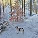 Winnie im Winterwald