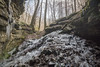 Lovely Lois Lair sink, Putnam County, Tennessee (Chuck Sutherland) Tags: lovelyloislair sink sinkhole karst geology nashvillebasin ordovician limestone ice icicle frozen putnamcounty tennessee tn