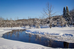 Winter Scene (T P Mann Photography) Tags: winter michigan river flow cold deep tree nature reflections ice water ellsworth morning