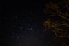 The Nights Sky (Fiachra J Kelly) Tags: beautiful photography longexposure astrophotography trees nature ireland