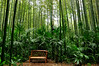 Enjoying the Nature (natureloving) Tags: nature bench forest bambooforest palmtrees natureloving nikon d90 nikonafsdxnikkor18300mmf3563gedvr