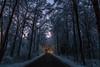 Winter Lights (J. Pelz) Tags: forest trees landscape road bluehour winter snow meeting