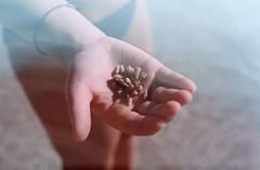 Coquillages & crustacés (Claire de La Bernardie) Tags: coquillages beach goodtime sand hand analog analogphotography sea macro grainfilm filmco filmisnotdead filmcamera minolta caledonie pins island holiday argentique 200iso fujifilm superia fujisuperia shellfish
