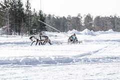 Khanty-56 (Polina K Petrenko) Tags: farnorth ruskinskaya russia siberia culture deer ethnic holiday indigenous khant khanty localpeople nikon reindeer traditional