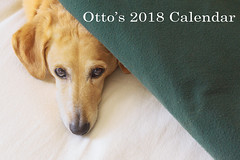Otto's calendar front cover 2018 (ejbSF) Tags: 2018ottocalendar critters otto calendar humor novelty dogs happy sanfrancisco