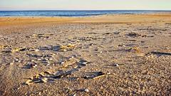 Seashells, pebbles and sand | coastal life on Delmarva (delmarvausa) Tags: eastcoast midatlantic delaware beaches ocean seashore fenwickislanddelaware fenwickislandde delmarva delmarvapeninsula bythesea atthebeach beachtown coastal coastalliving coastaldelmarva southerndelawaware fide fenwickisland sussexcounty shells sand beach seashells outdoors scenicdelmarva scenery southerndelaware fideusa