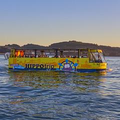 HIPPOtrip (Nigel Musgrove-2 million views-thank you!) Tags: hippotrip amphibian tour bus on river tagus lisbon portugal hippo vehicle sightseeing circuito turístico anfíbio