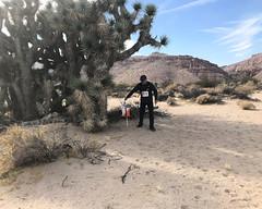 041 Punching The Joshua Tree Grove Control (saschmitz_earthlink_net) Tags: 2017 california orienteering redrockcanyon statepark laoc losangelesorienteeringclub mojavedesert desert kerncounty elpasorange
