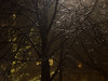 Fine glittering on the square (yellowgreywolf) Tags: wildtree christmis december yellowgreywolf spark glitter